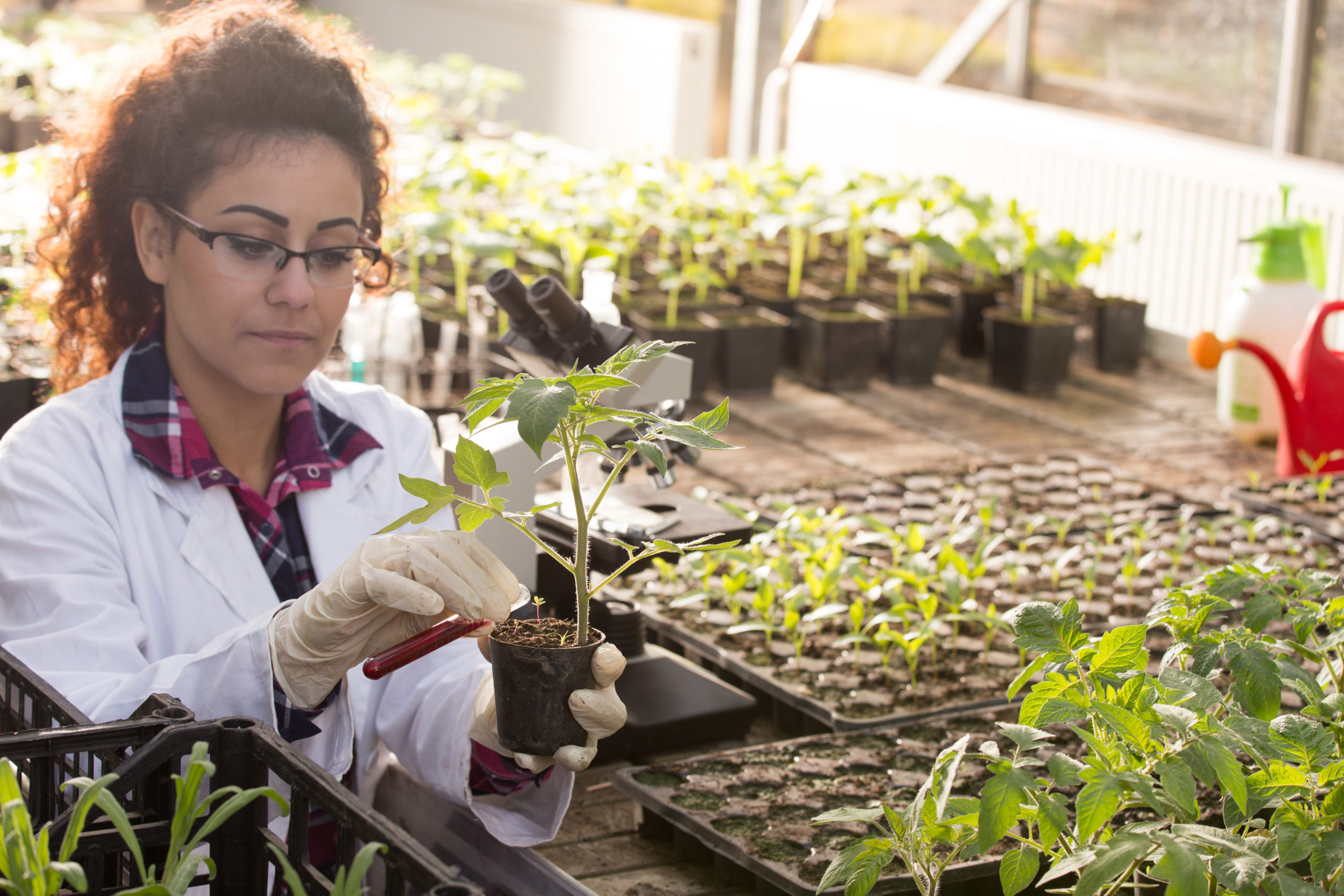 What Is The Difference Between A Horticulture Degree And An Agriculture Degree Best Choice Schools